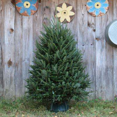 5 ft. Freshly Cut Fraser Fir Real Christmas Tree