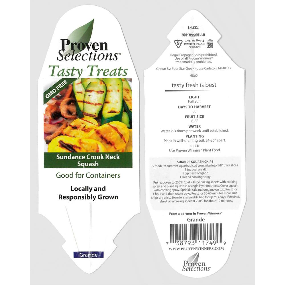 PROVEN WINNERS 4.25 in. Grande Proven Selections Sundance Crook Neck Squash Live Plant Vegetable (Pack of 4)