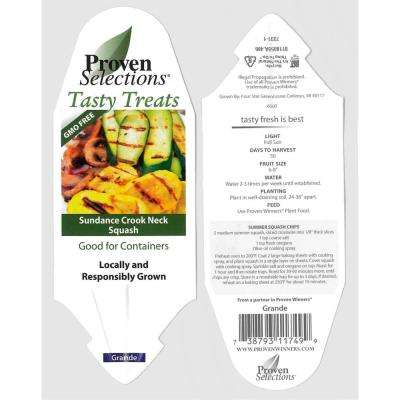 4.25 in. Grande Proven Selections Sundance Crook Neck Squash Live Plant Vegetable (Pack of 4)