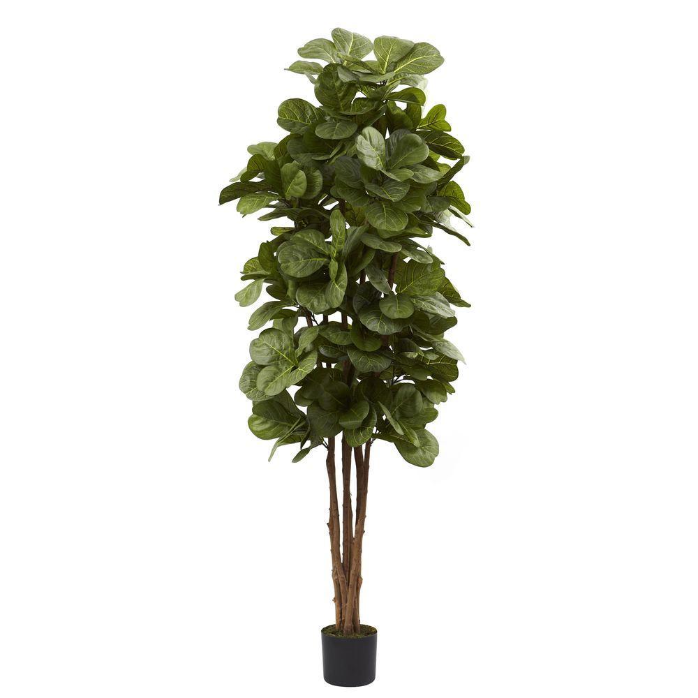 6 ft. Fiddle Leaf Fig Tree