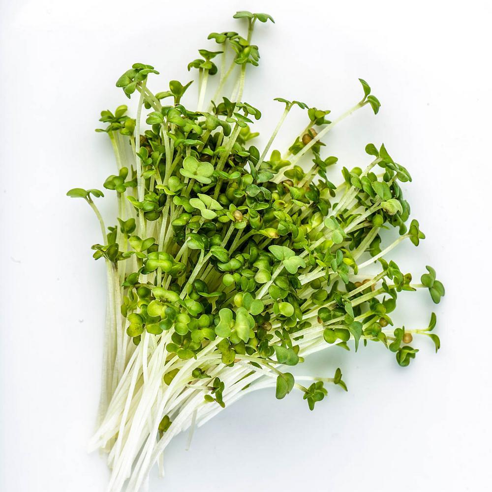 Microgreen Oriental Mustard Wasabi (1 oz. Seed Packet)