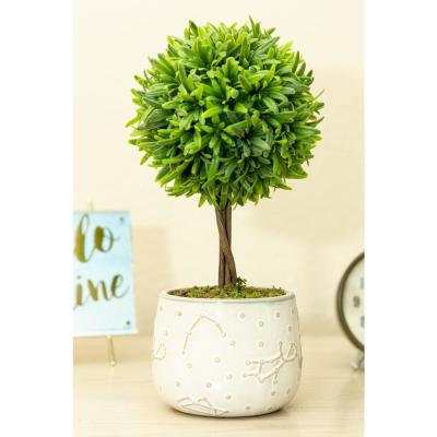 10 in. Artificial Boxwood in Constellation Ceramic Pot