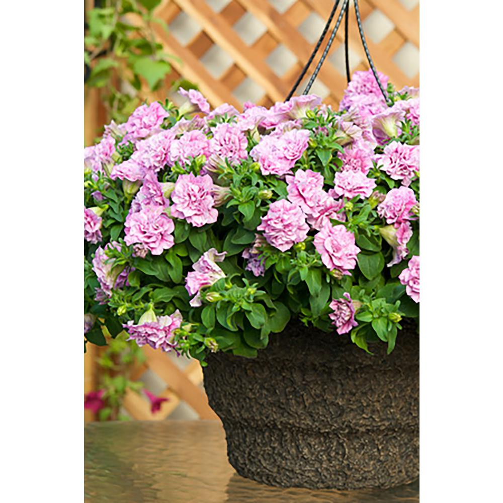 Proven Winners Surfinia Summer Double Rose (Petunia) Live Plant ...