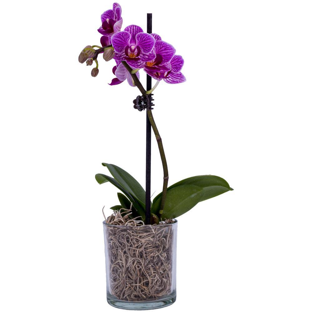 Orchid Flower Home Depot
