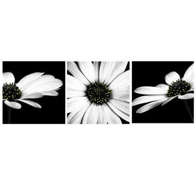 23.6 in. x 7.8 in. x 1 in. 3-Piece Black and White Daisies Frameless Printed Canvas Wall Art