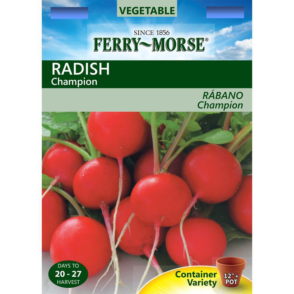 Radish Champion Seed