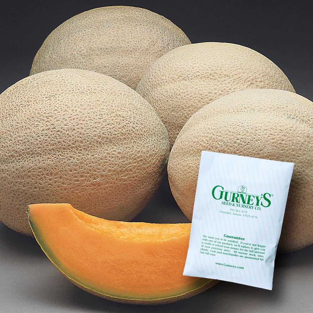 Cantaloupe Athena Hybrid (25 Seed Packet)