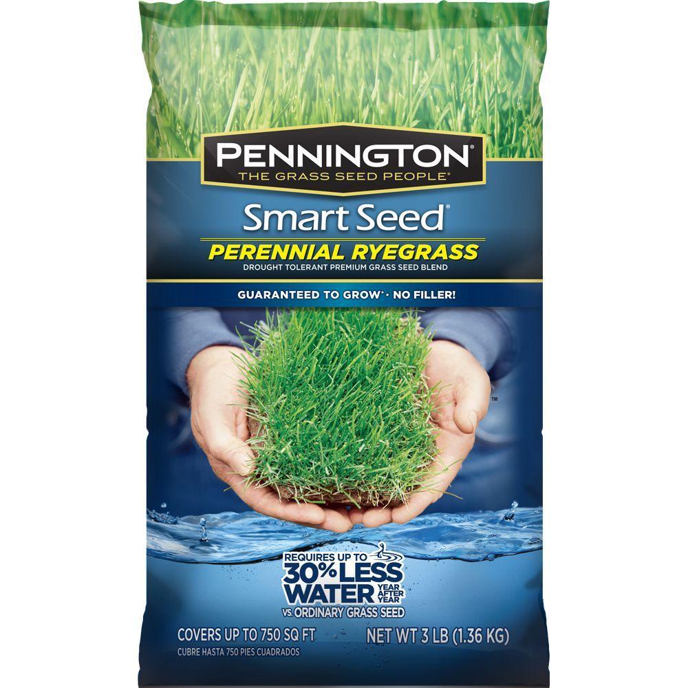 Pennington Pennington Smart Seed 3 lb. Perennial Ryegrass Blend