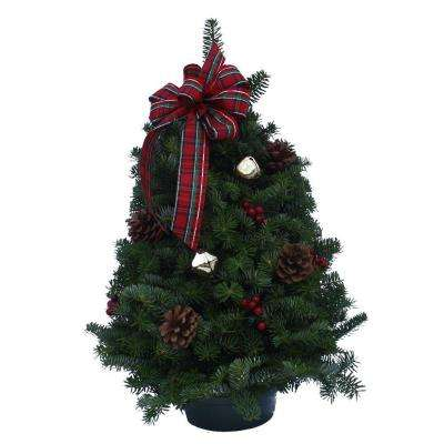 18 in. Balsam Fir Highland Fresh Tabletop Tree Arrangement : Multiple Ship Weeks Available