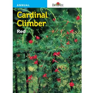 Burpee Cardinal Climber Red Seed 49008 The Home Depot