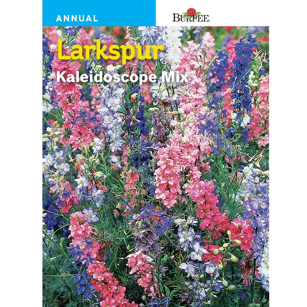 Burpee Larkspur Kaleidoscope Mix Seed 33024 The Home Depot