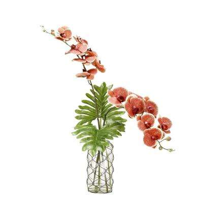 Indoor Red and Cream Phael Orchids in Glass Vase
