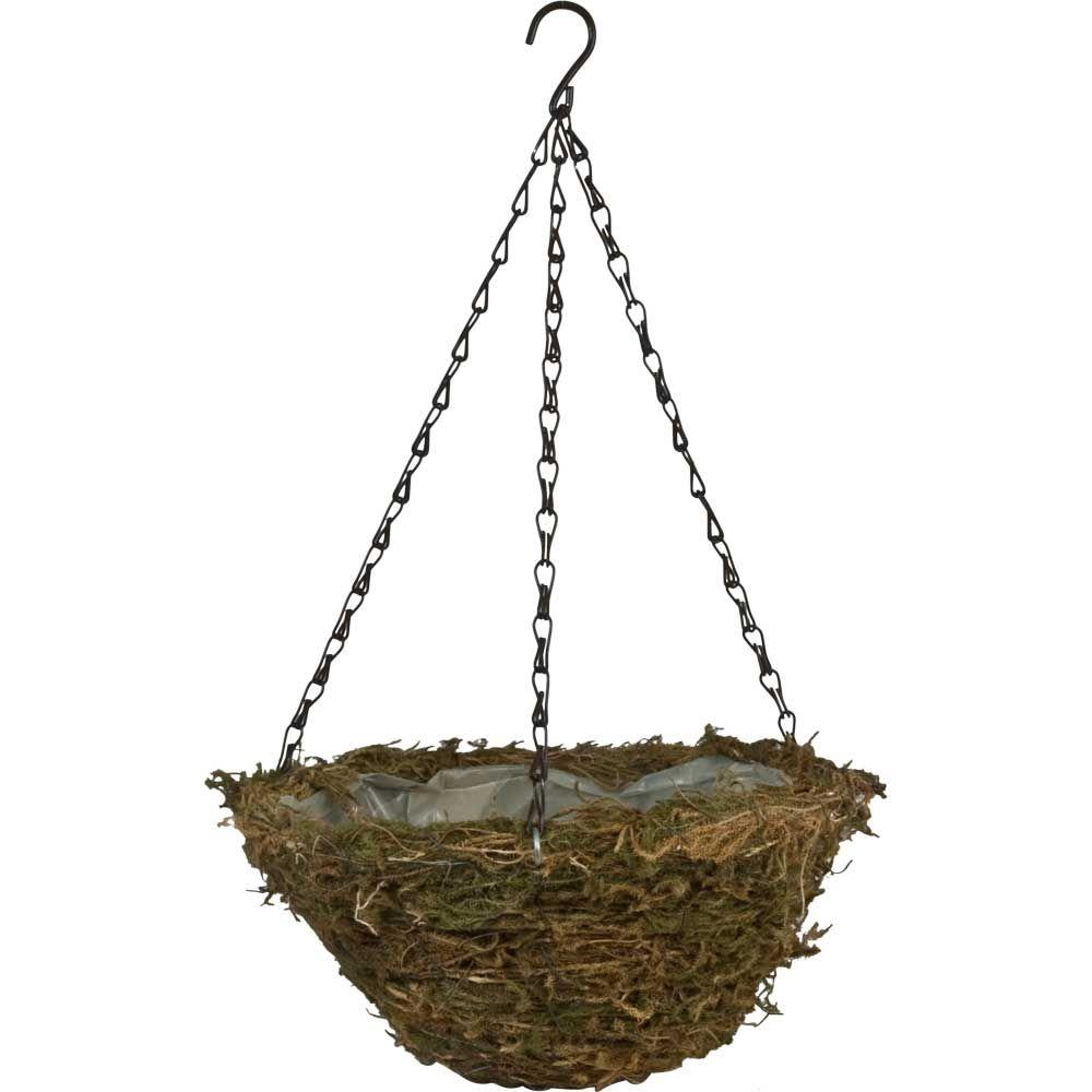 12 in. Fern Moss Coconut Fiber Hanging Basket with Brown Chain