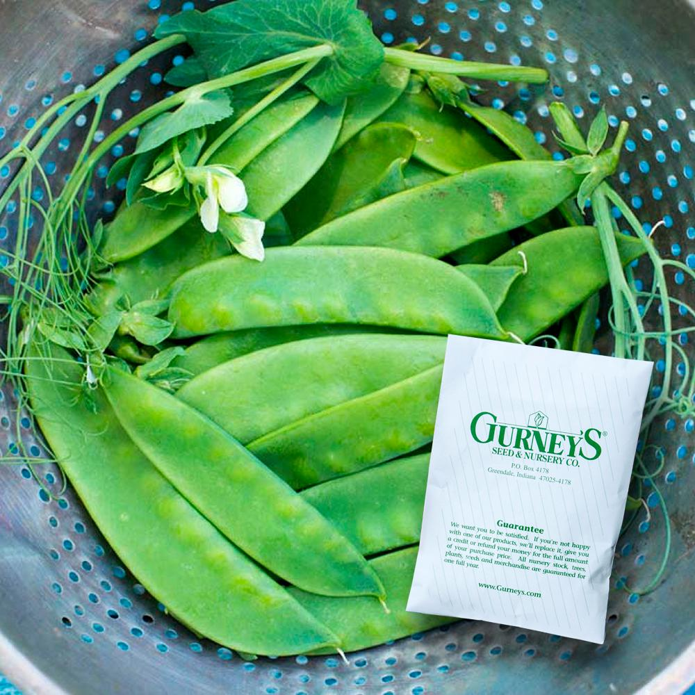 Gurney's 0.50 lb. Snow Pea Avalanche (Seed Packet)