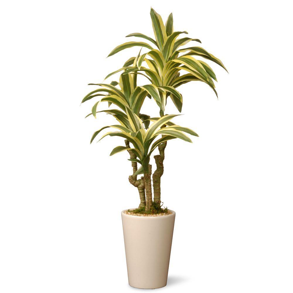 21 in. Garden Accents Artificial Dracaena Plant