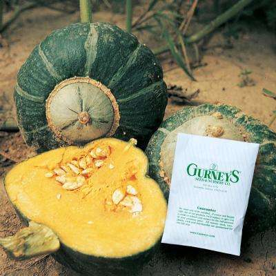 Squash Winter Buttercup (25 Seed Packet)