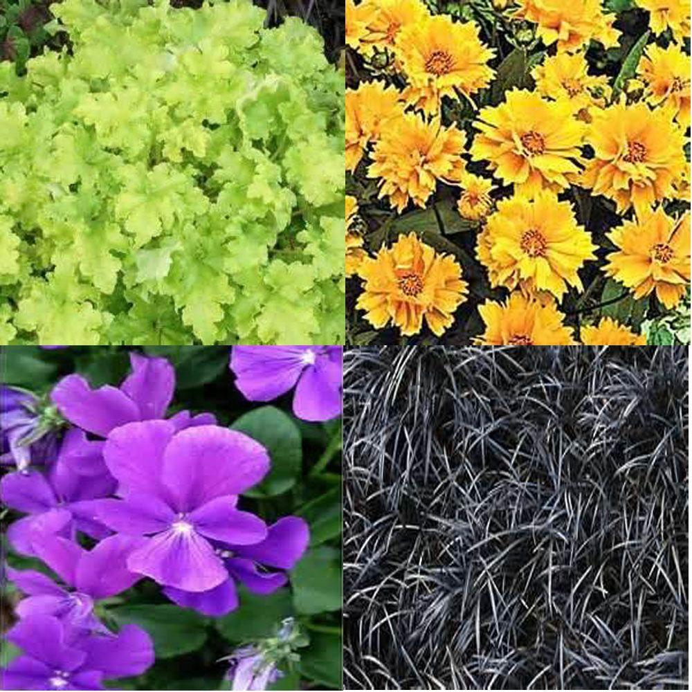 OnlinePlantCenter 1 gal. Part Sun and Shade Garden 4 Live Plants Package