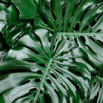 4 in. Swiss Cheese Plant Monstera Plant in Grower Pot (4-Piece)