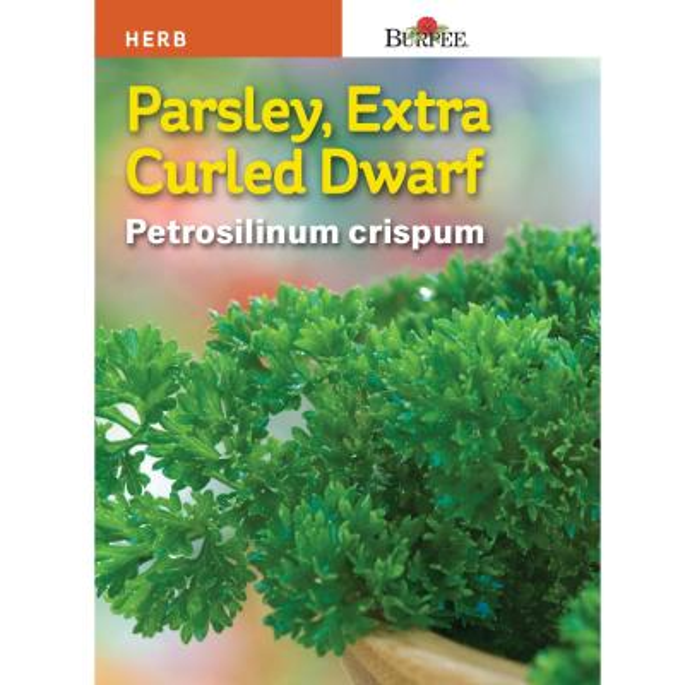 Herb Parsley Extra Curled Dwarf Seed