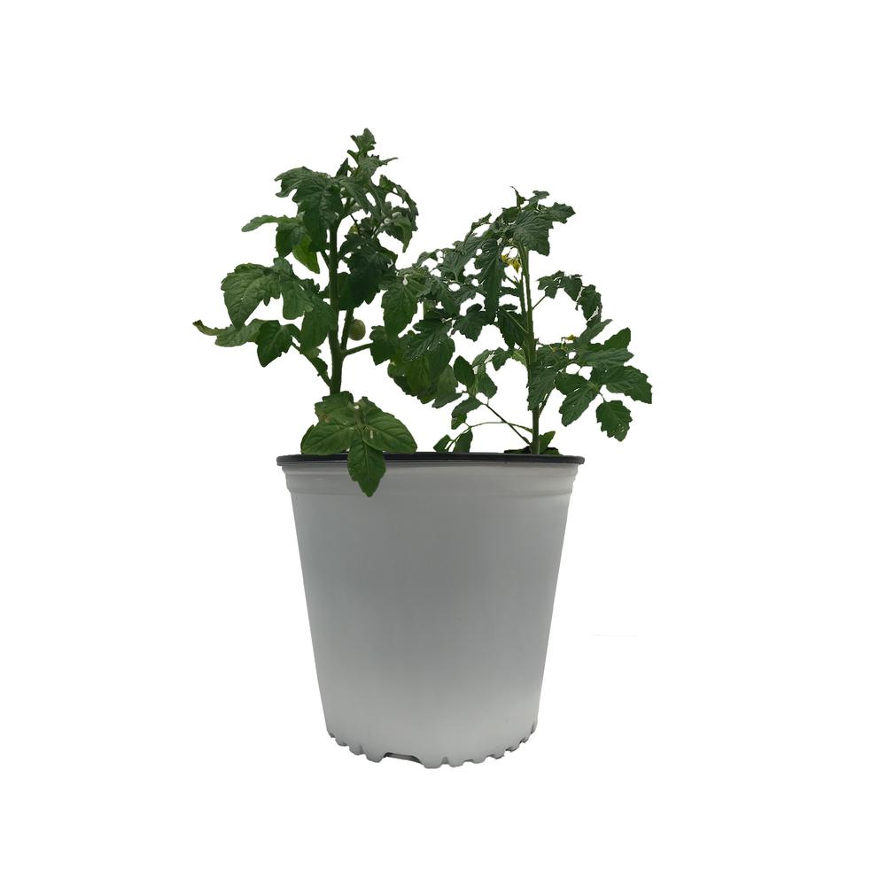 Viagrow Viagrow 3 Gal. White Round Plastic Nursery Garden Pots (10-Pack) (3 actual gallons / 11.35 liters)