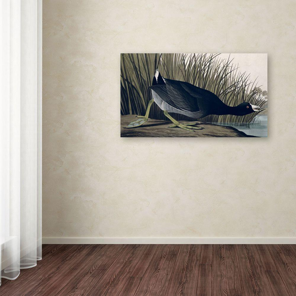 10 in. x 19 in. American Coot Canvas Art