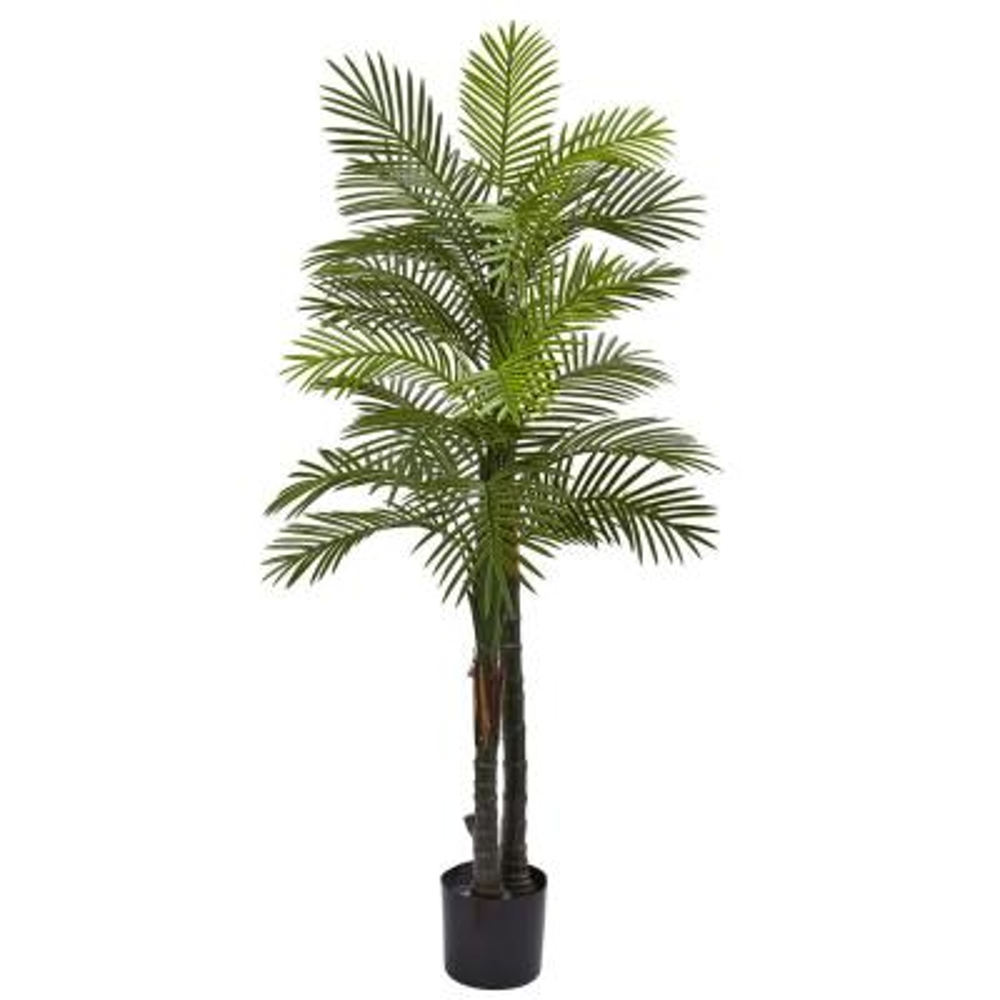5.5 ft. Double Robellini Palm Tree UV Resistant (Indoor/Outdoor)