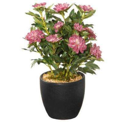 11 in. Potted Zinnia Flowers