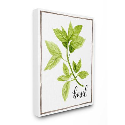 "16 in. x 20 in. ""Watercolor Herb Illustration Basil Painting with Script"" by Artist Grace Popp Canvas Wall Art"