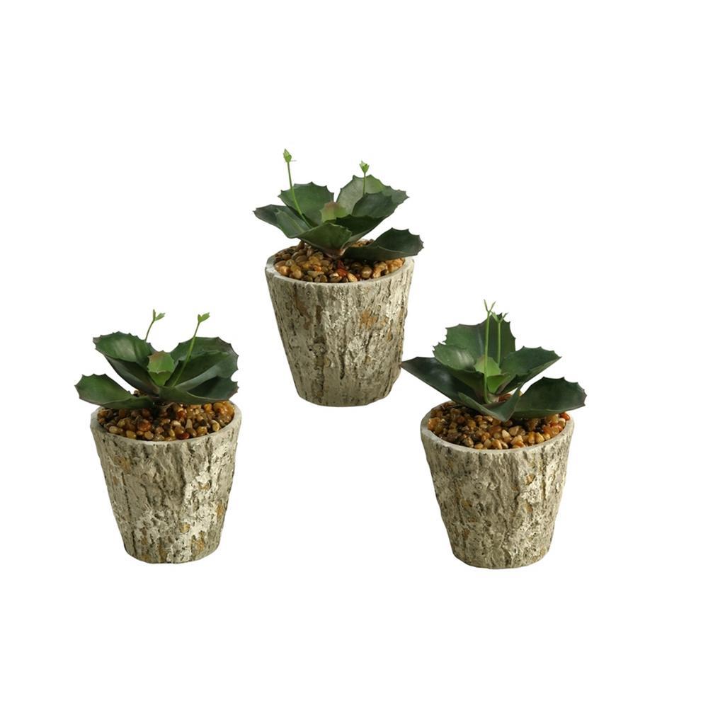 Indoor Wild Succulent in Cement Planter (Set of 3)