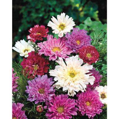 Cosmos Double Click, Red, Pink and White Flowers (30 Seed Packet)