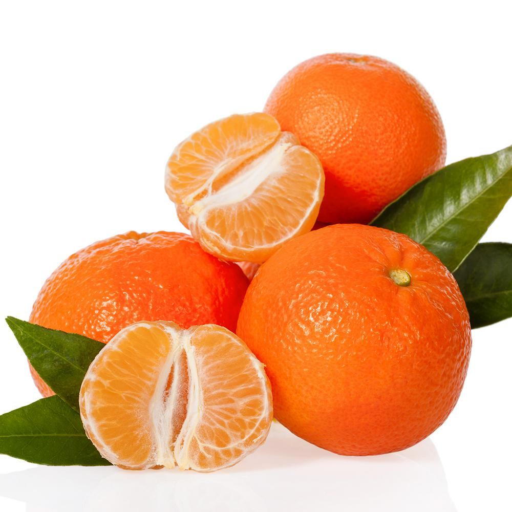 Van Zyverden Mandarin Citrus Tree Clementine Mandarin 1 Plant