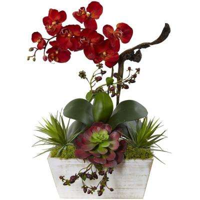 Christmas Succulent Arrangement.21 In Seasonal Orchid And Succulent Garden With White Wash Planter