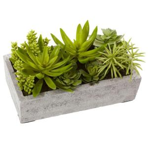 Succulent Garden with Concrete Planter