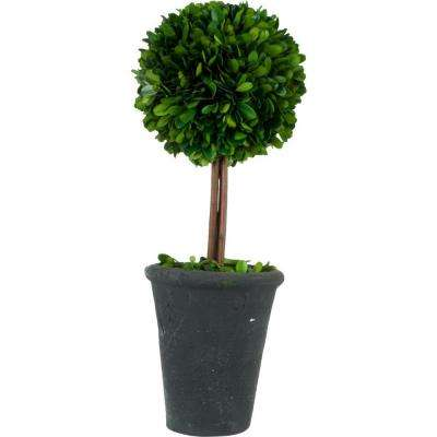 5.5 in. W x 16.5 in. H Preserved Boxwood Ball Topiary in Black Terracotta Pot