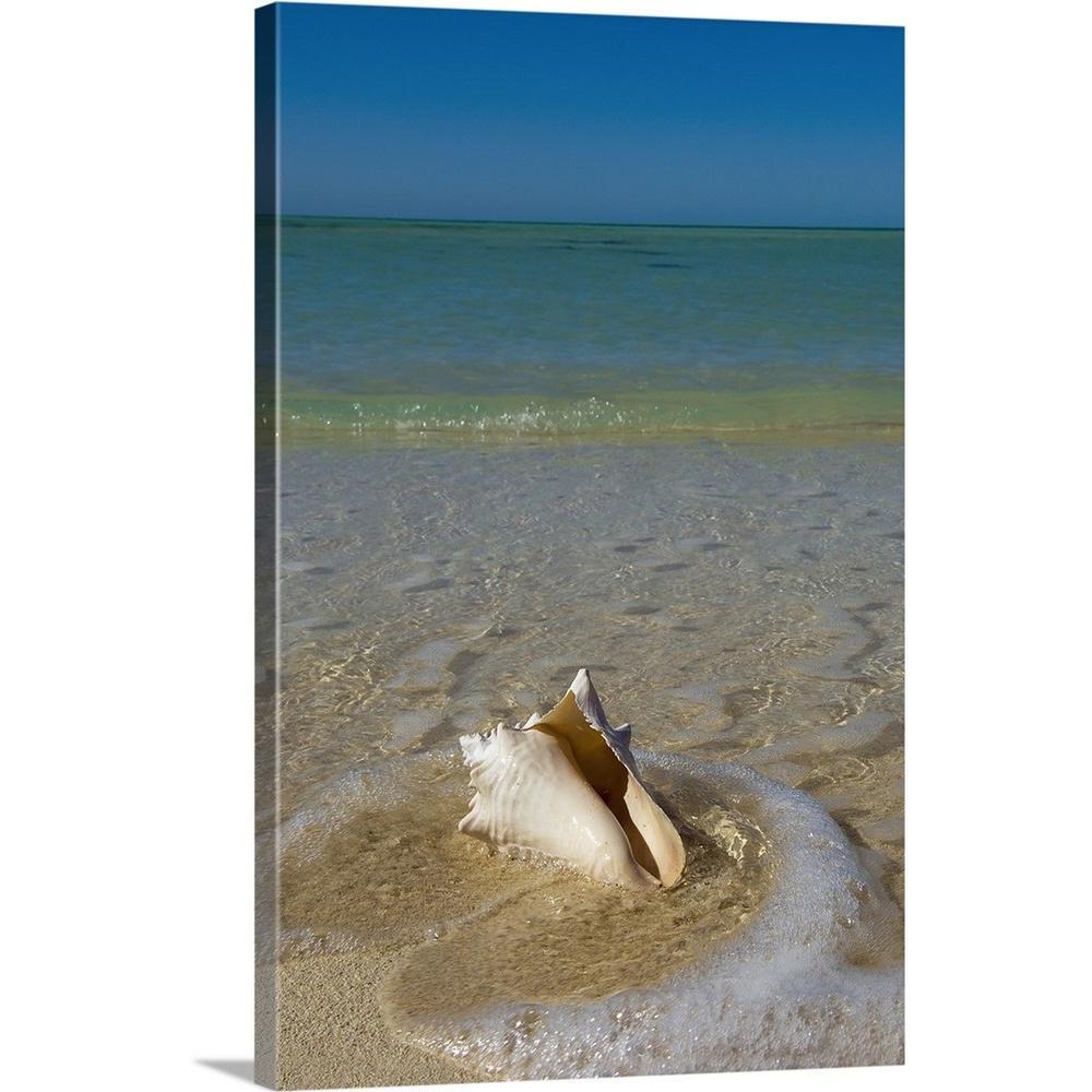 Greatcanvas Florida Keys Conch Shell On Sandy Beach Key West