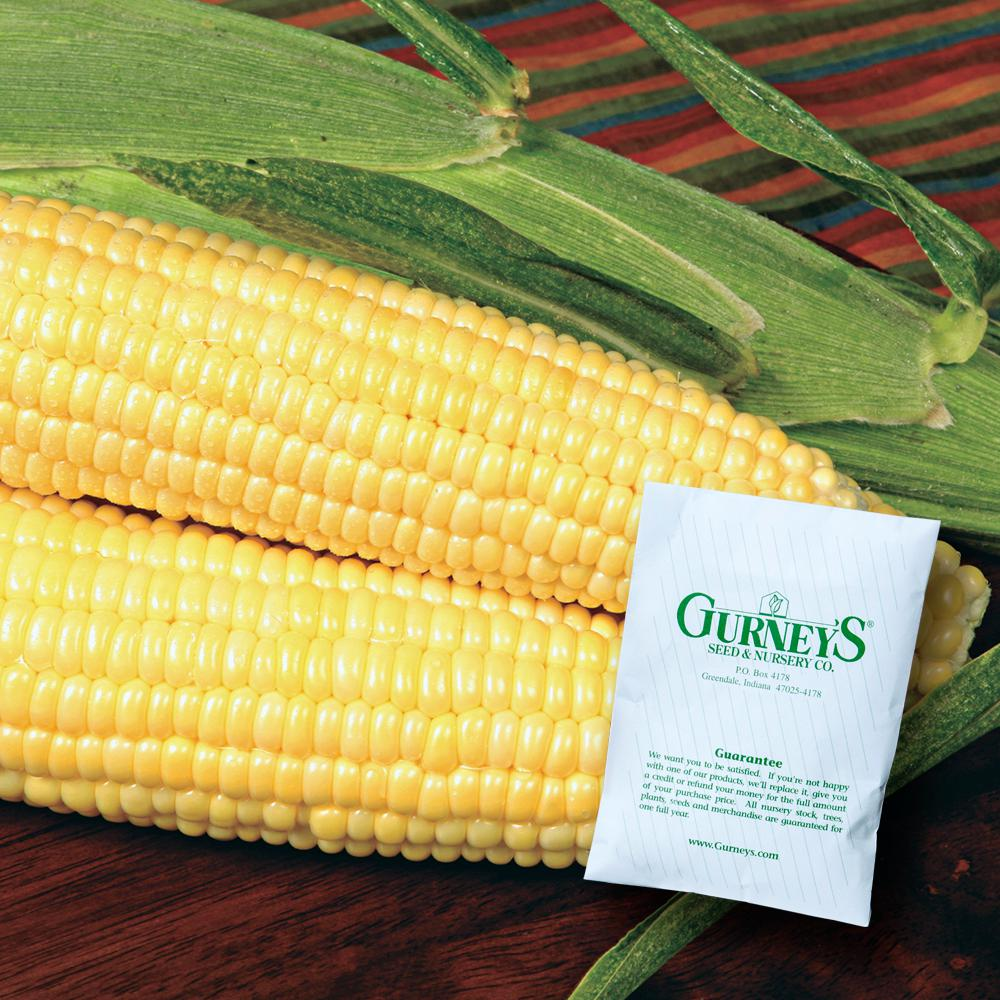 Sweet Corn Bodacious R/M Hybrid (250 Seed Packet)