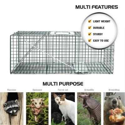 Large 1-Door Professional Humane Steel Live Animal Cage Trap (Raccoons, Opossums, Groundhogs, Skunks, Feral Cats)