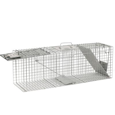 Large 2-Door Professional Live Animal Cage Trap for Raccoon, Opossum, Groundhog, and Armadillo
