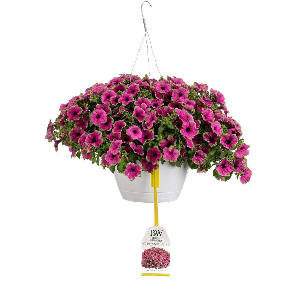 Proven Winners 10 in. Supertunia Picasso in Purple Mono Hanging Basket (Petunia) Live Plant, Purple Flowers