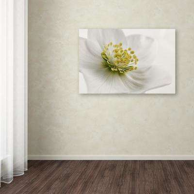 "22 in. x 32 in. ""White Helleborus"" by Cora Niele Printed Canvas Wall Art"