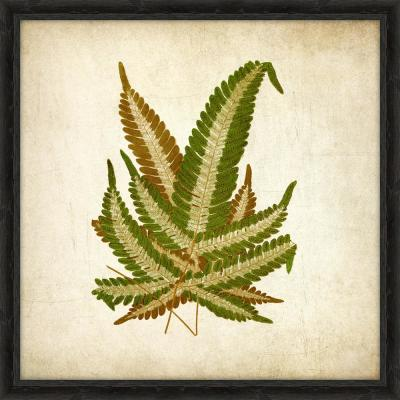 "18 in. x 18 in. ""Simple Fern V"" Framed Giclee Print Wall Art"