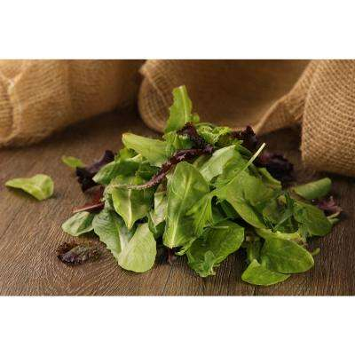 4.25 in. Grande Proven Selections Mix Lettuce Live Plant Vegetable (Pack of 4)