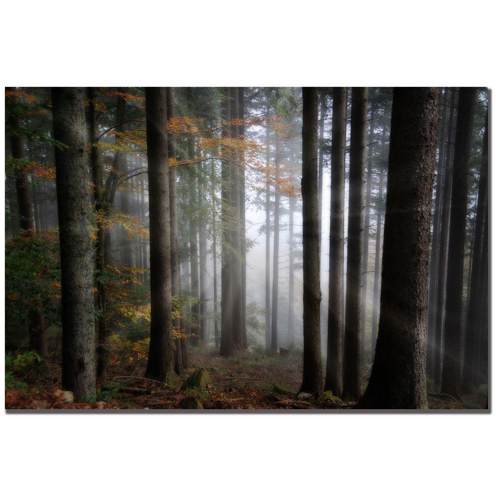 Trademark Fine Art 16 in. x 24 in. Light Forest Canvas Art-DISCONTINUED