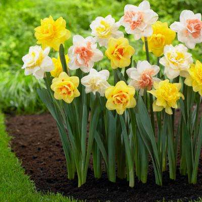 Narcissus Double Mix Bulbs (20-Pack)