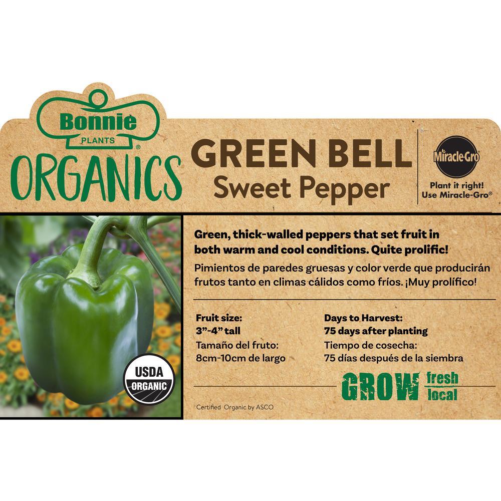 Organic Bonnie Green Bell