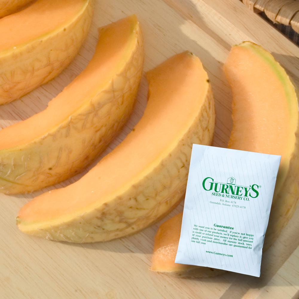 Cantaloupe Gurney's Li'l Sweet Improved Hybrid (20 Seed P...