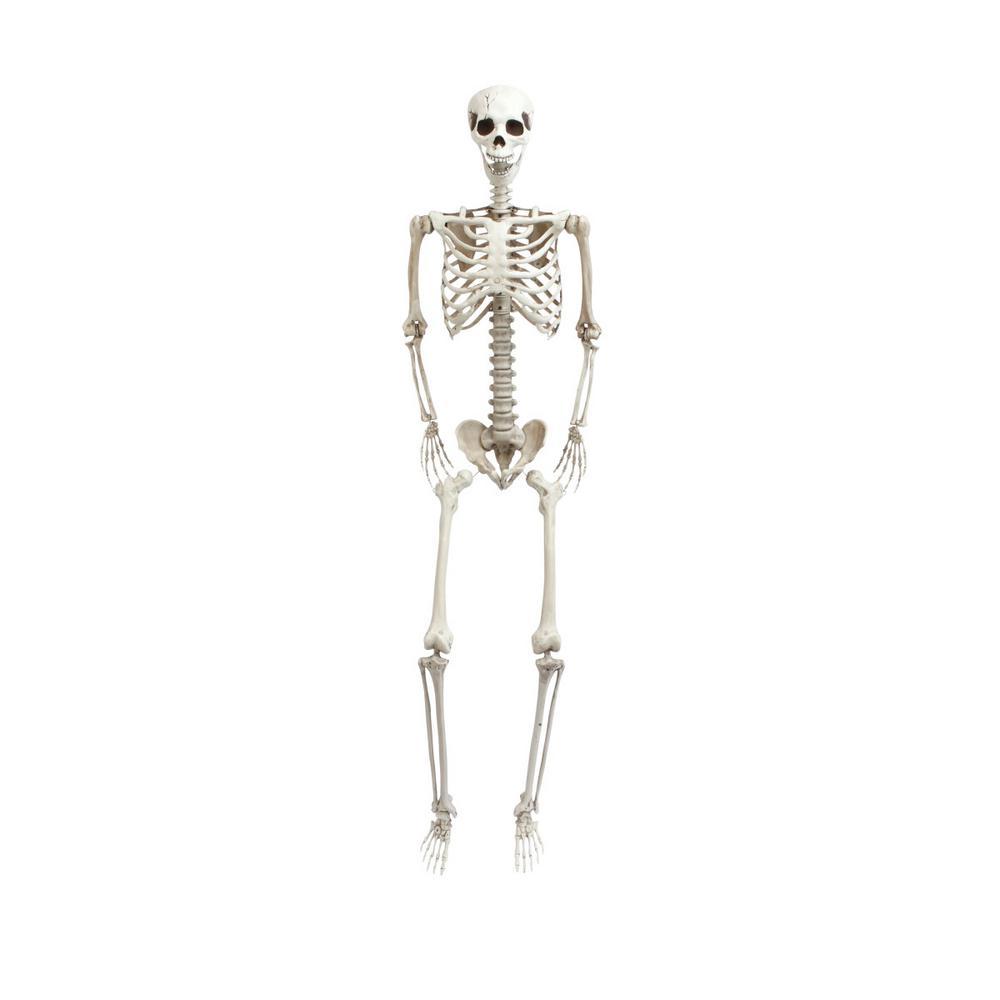 70.9 in. H Skeleton Figure