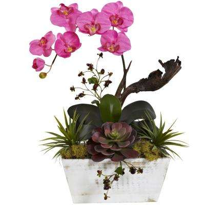 21 in. Orchid and Succulent Garden with White Wash Planter in Dark Pink