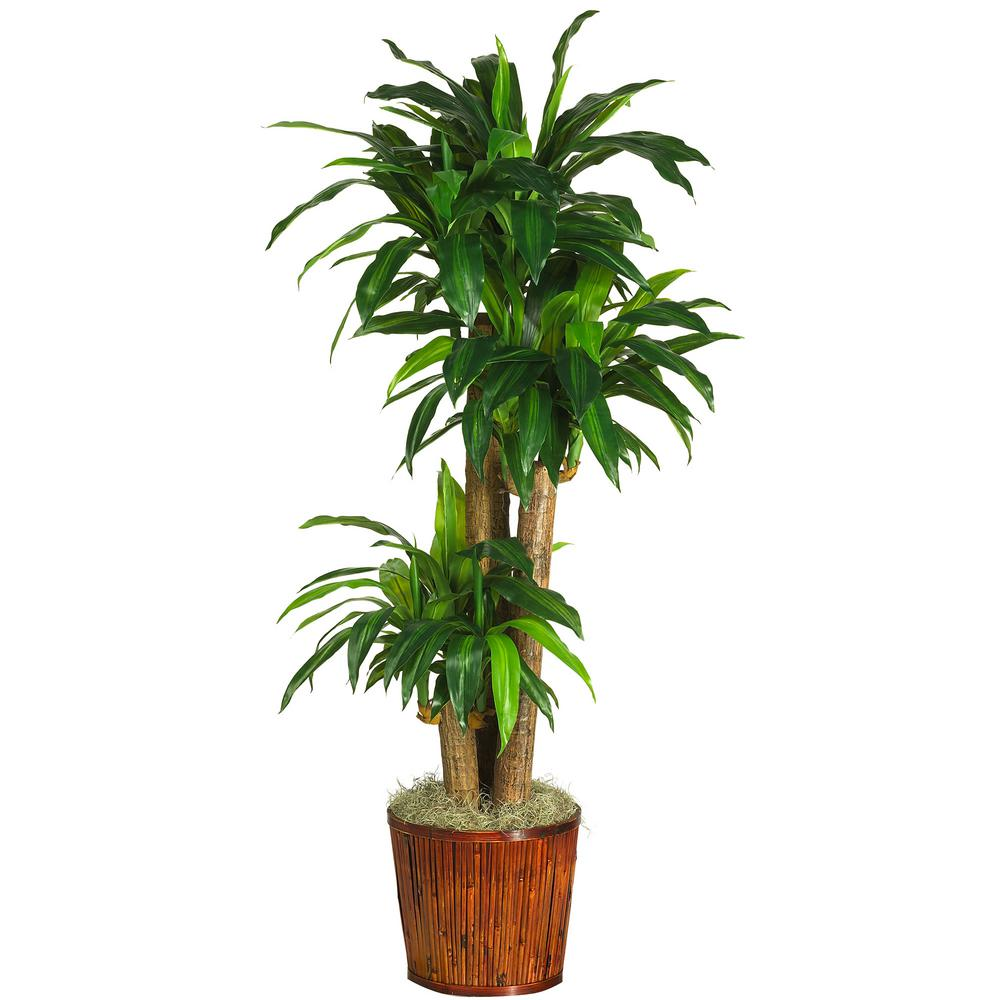 62 in. Dracaena with Basket Silk Plant (Real Touch)