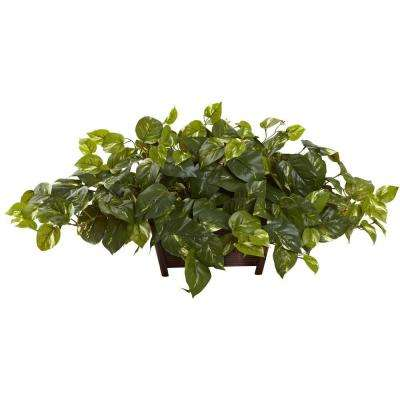 Pothos with Rectangle Decorative Planter